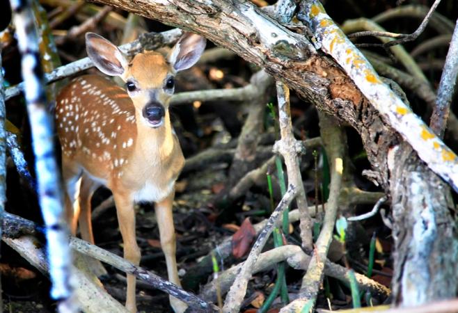 MangroveRootsSurprisePhotoWeb